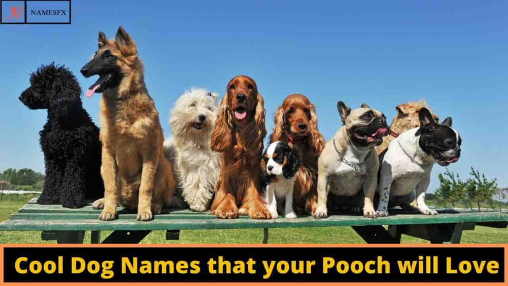 Cool Dog Names, Cool names for dogs