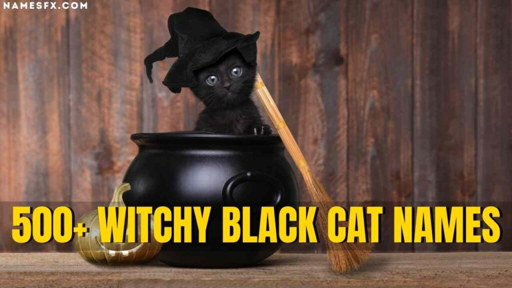 Witchy Black Cat Names,
