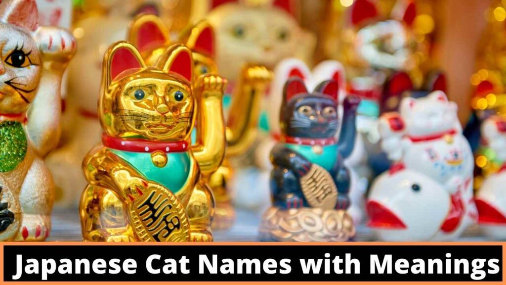 Japanese Cat Names with Meanings